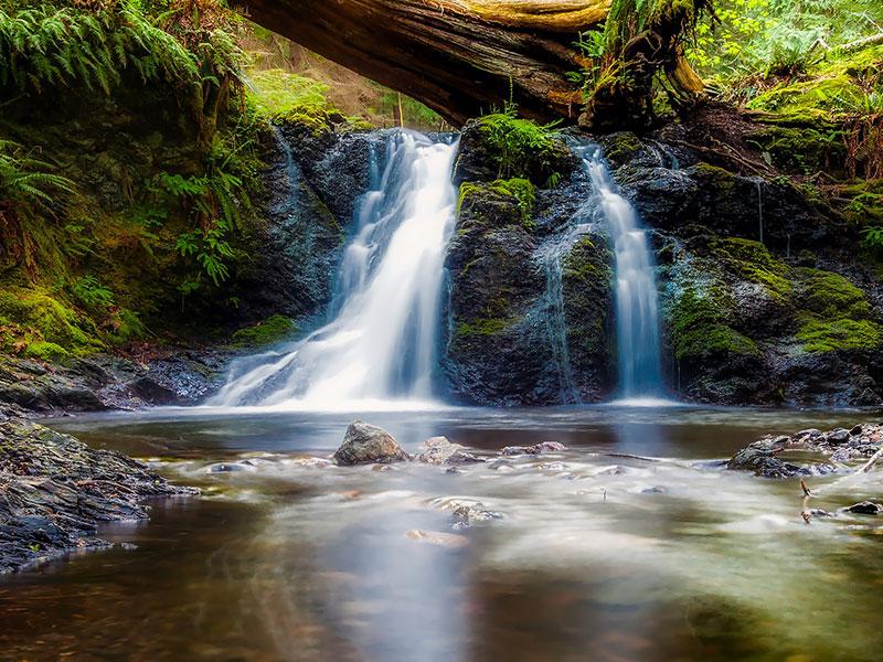 Erdőfürdő, erdőterápia, Pihenőház, wellbeing, természet, életerő, egészség
